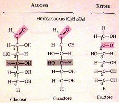5-6-carbon-sugar